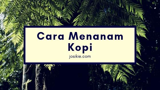 Sejarah Kopi dan  Masuknya Kopi ke Indonesia