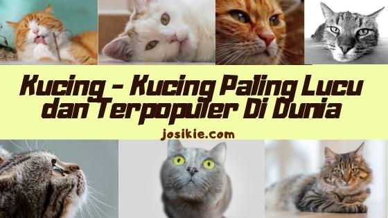 Kucing – Kucing Terlucu dan Terpopuler Di Dunia