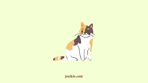 Kinar Si Kucing Malang